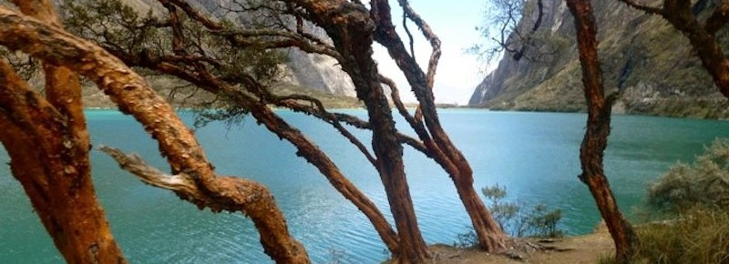 Trees Amongst the Glacial Lake in Peru